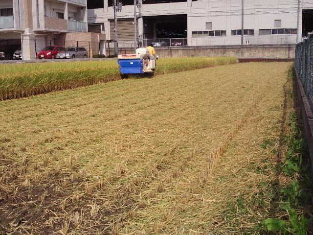 20120929稲刈り