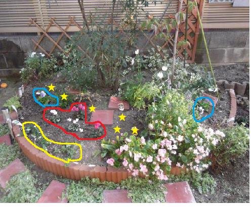 2012年10月25日ハナミズキ花壇植後