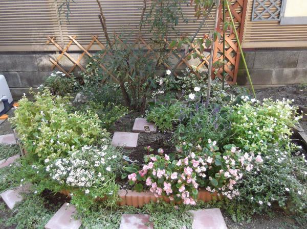 20121025ハナミズキ花壇植前