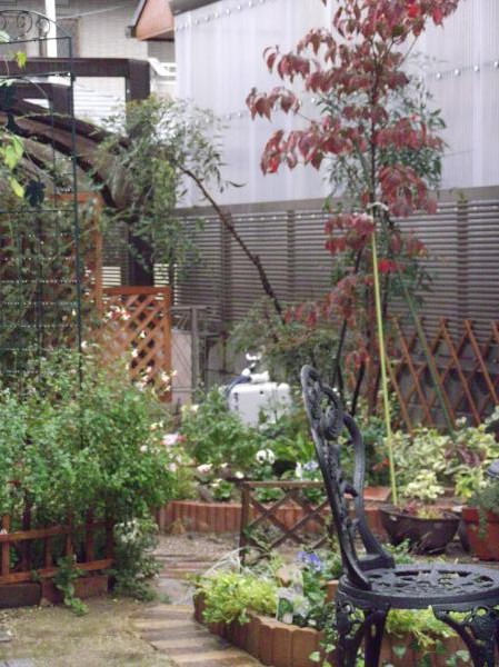20121111今日の雨庭