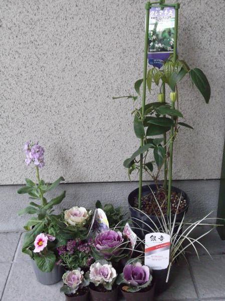 20121209松尾園芸苗②