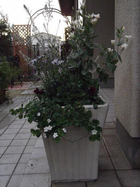 20121220寄せ植え③