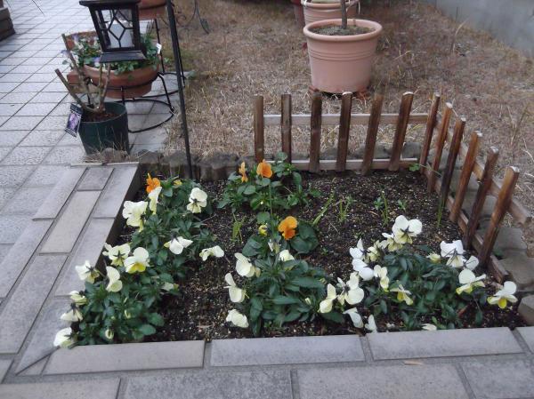 20130115門入って直ぐ花壇