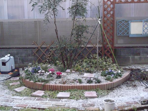 20130128ハナミズキ花壇