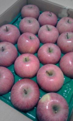 apple121216.jpg