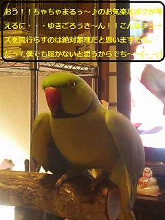 DSC_1193.jpg