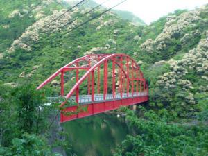 ツール・ド・東米良戸崎橋サイクリング長距離サイクリングツーリング