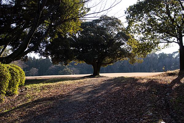 森林公園-2