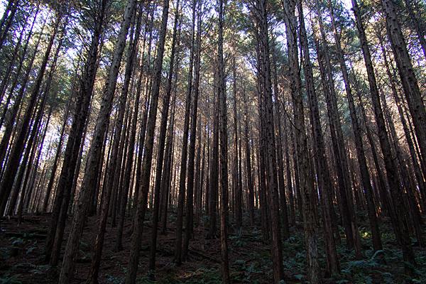 海上の森1-5