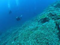 本島沿いダイビング