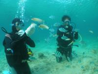 本島体験ダイビング