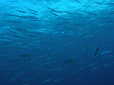 チービシ諸島ダイビング