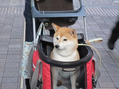 東京駅バックにアップ
