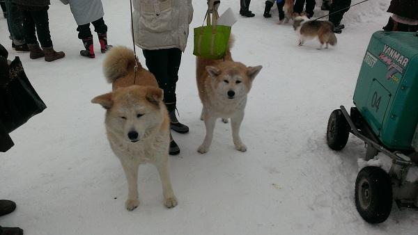 犬っこ祭り4