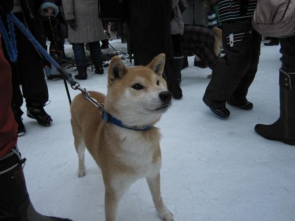 犬っこ祭り6