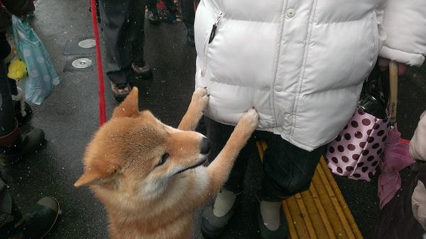 犬っこ祭り7