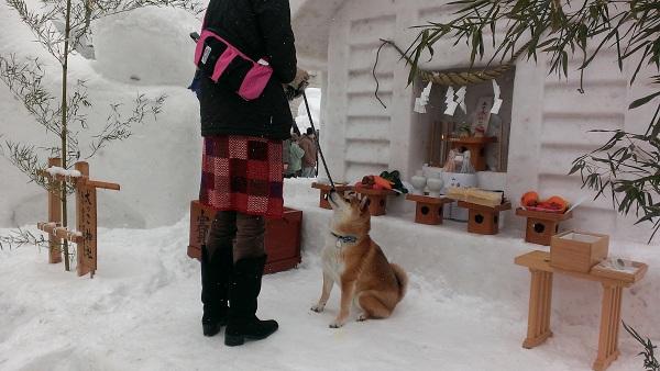 犬っこ祭り9