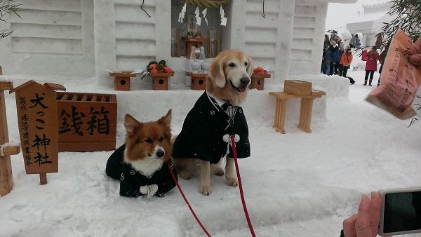 犬っこ祭り10