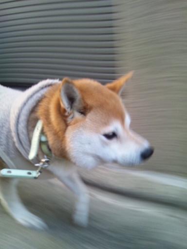 軽快お散歩