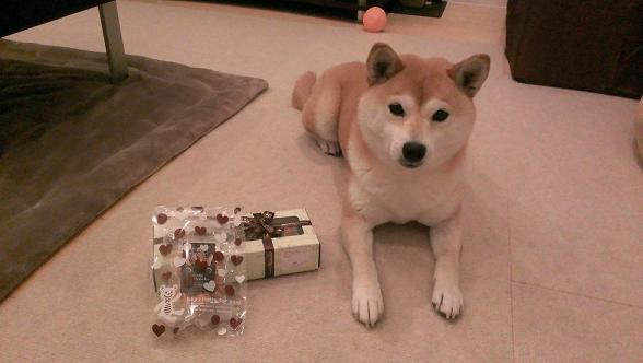 小夏ちゃんプレゼント4
