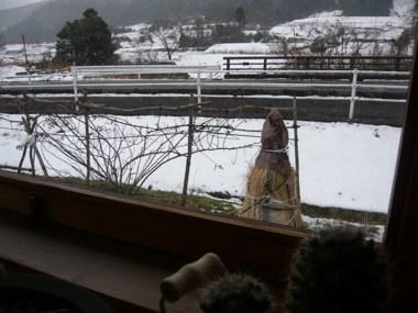 小屋窓からレモン250127