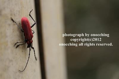 2012_0624_122621-IMG_5172.jpg