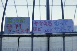 DPP_hitachinaka140.jpg