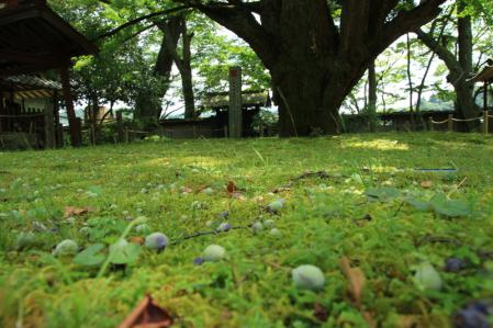EOS_2012_07_14_0097.jpg