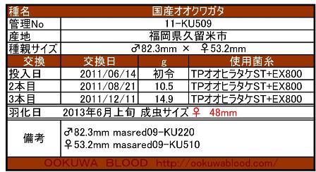 11KU-509.jpg