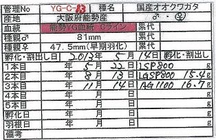 BS-YG-C13.jpg