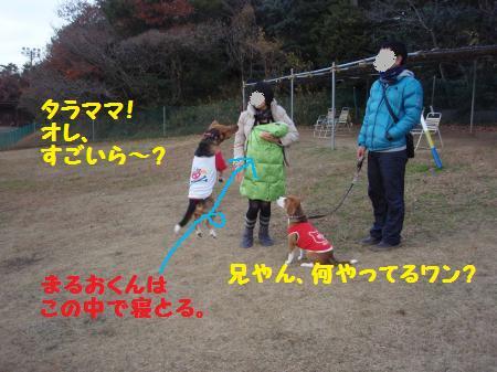 023_convert_20121228232747.jpg