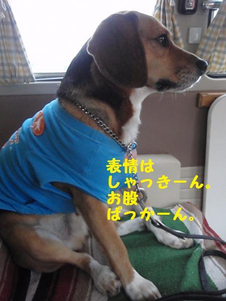 028_convert_20130122230356.jpg