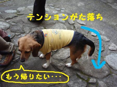 037_convert_20121208192905.jpg