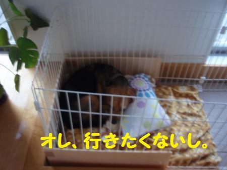 038_convert_20130104205915.jpg