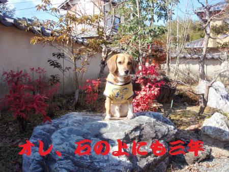 039_convert_20130106160528.jpg
