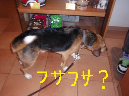 045_convert_20130104210431.jpg
