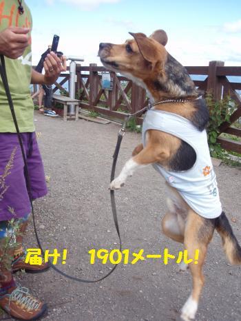 051_convert_20120923152805.jpg