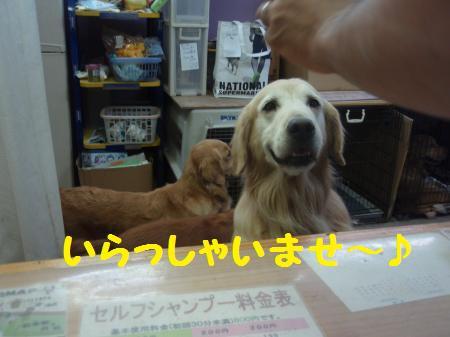 056_convert_20121020195617.jpg