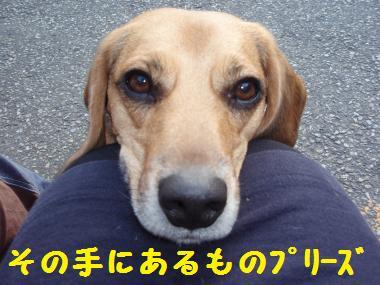 070_convert_20121216221040.jpg
