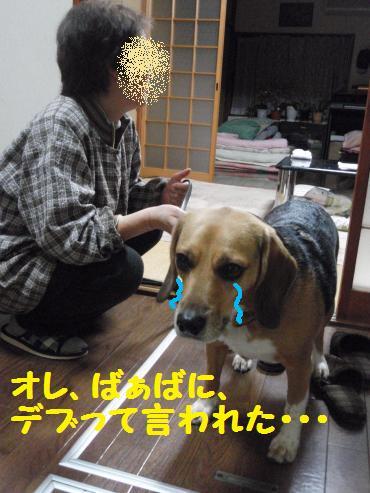 071_convert_20130106161303.jpg