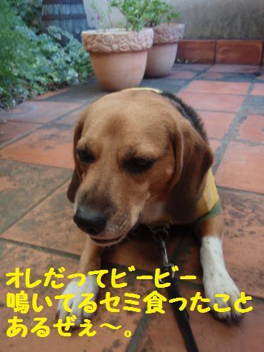 072_convert_20121222001044.jpg