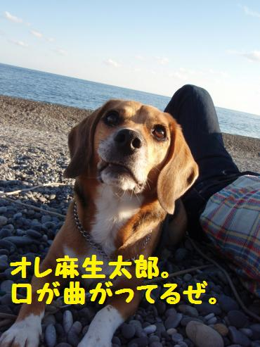 135_convert_20121218222439.jpg