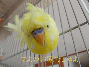 misokamayo-3.jpg