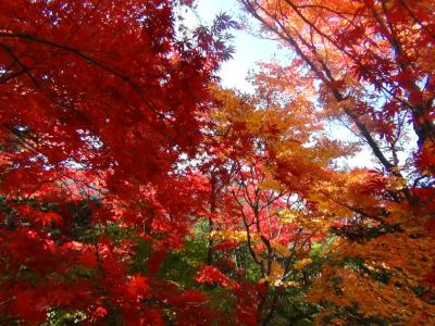 逍遥園の紅葉⑤
