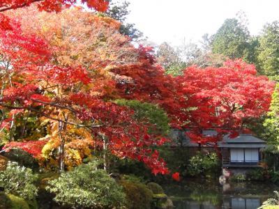 逍遥園の紅葉②