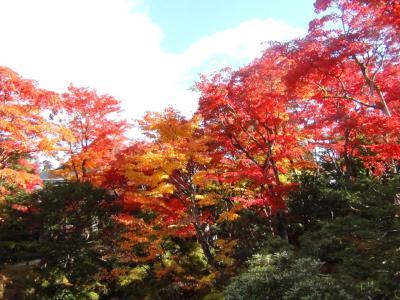 逍遥園の紅葉①
