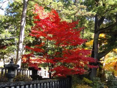 大猷院の紅葉