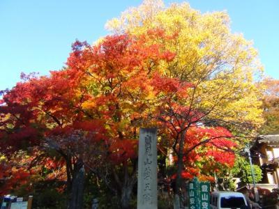 高尾山麓の紅葉①