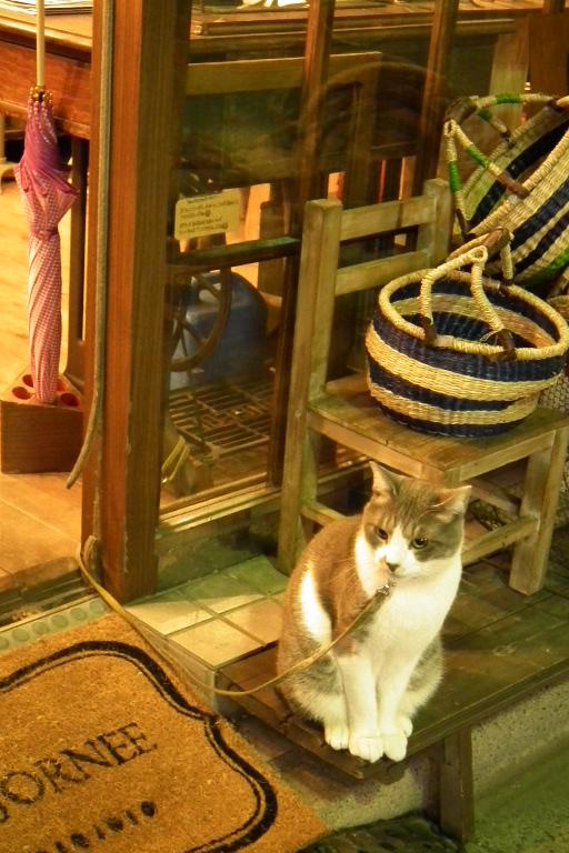 雑貨屋さんの猫さん。