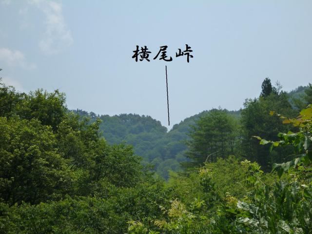 maruyama43.jpg